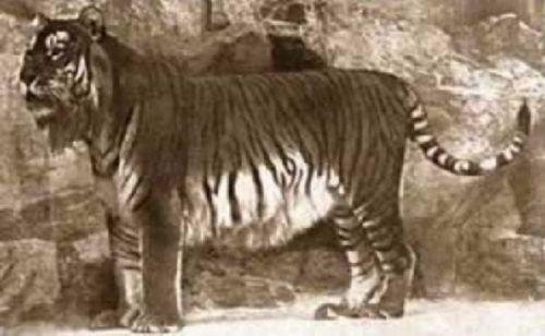 盘点已经灭绝的10种动物:身上有袋子的食肉动物(7)
