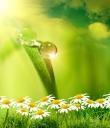 语言,要像阳光、花朵、净水