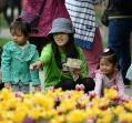北京景山公园牡丹文化艺术节举行 游客沉醉花海