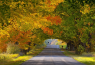 轻松爱上密西根秋色的五种方式