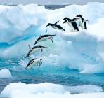 海航开拓中国人自组团游南极大市场