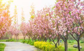 """开好人民期待的""""春天盛会"""""""